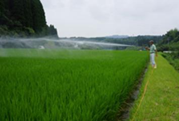 和水町 村上さんの水稲